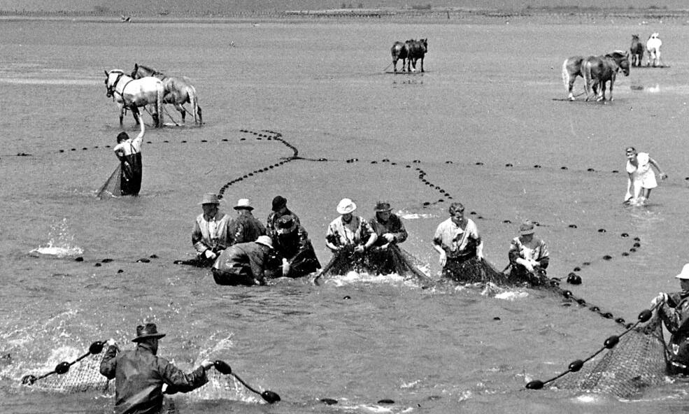 Legendary: Columbia River's fishing horses