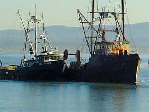 Port of Ilwaco Loses Desire