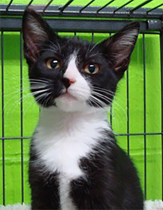 Animal Shelter Report  Darling fall kittens are here