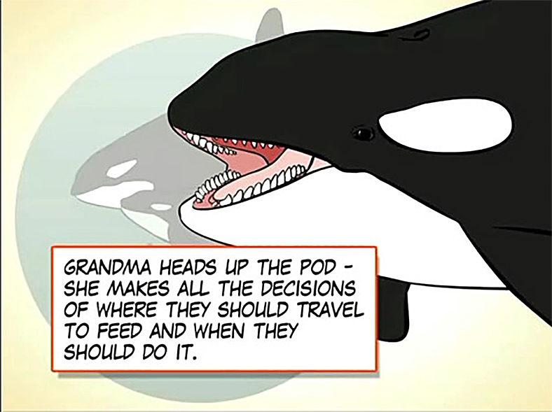 Grandma orca
