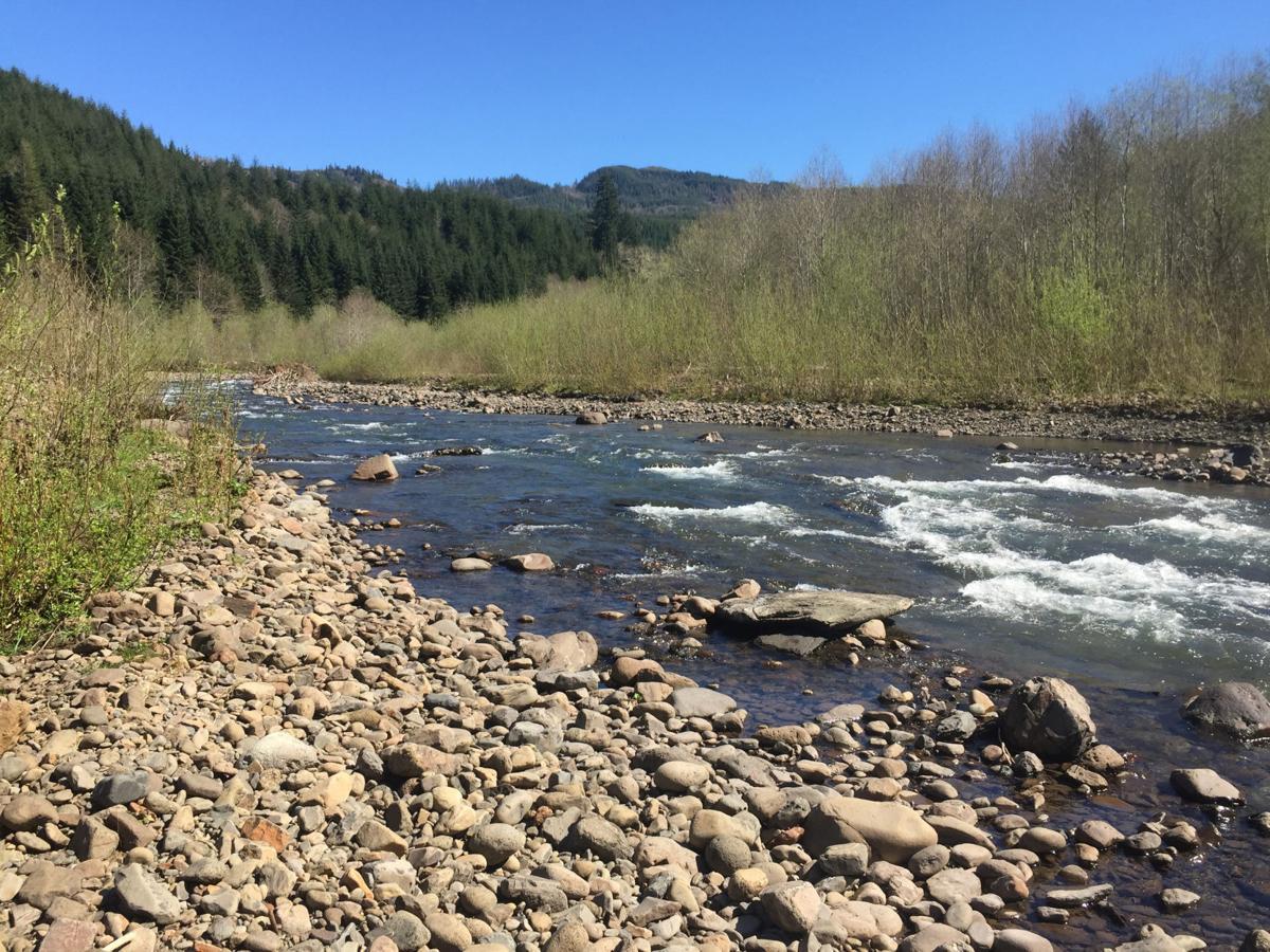 Cowlitz Pacific County salmon work