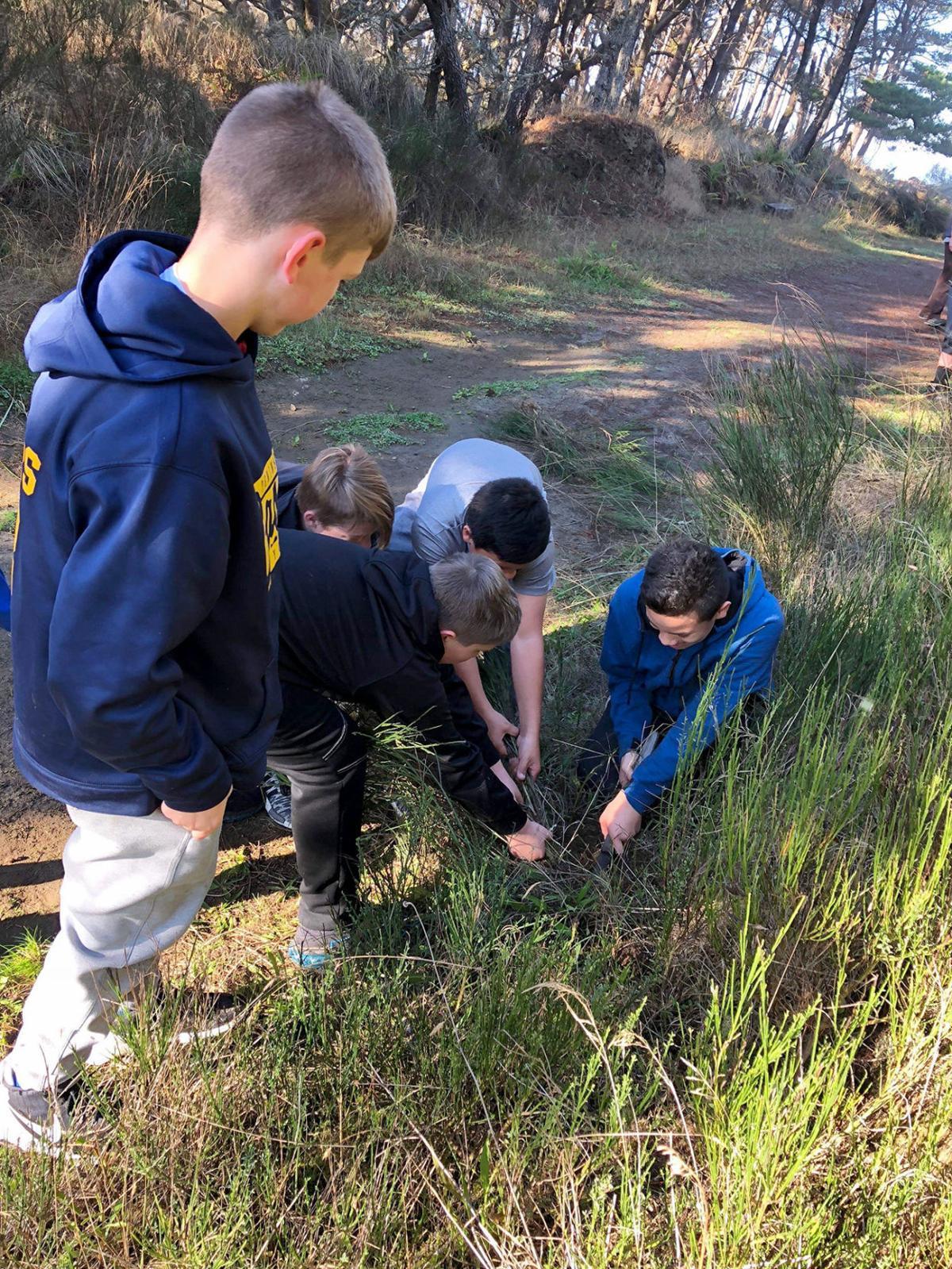 Seventh-graders tackle noxious Scotch broom