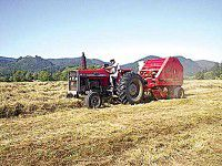 'Old Haymaker' makes for great haying weather