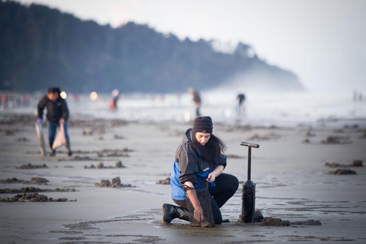Jordan Salazar, of Milwaukie, Or., puts a razor clam in her bag