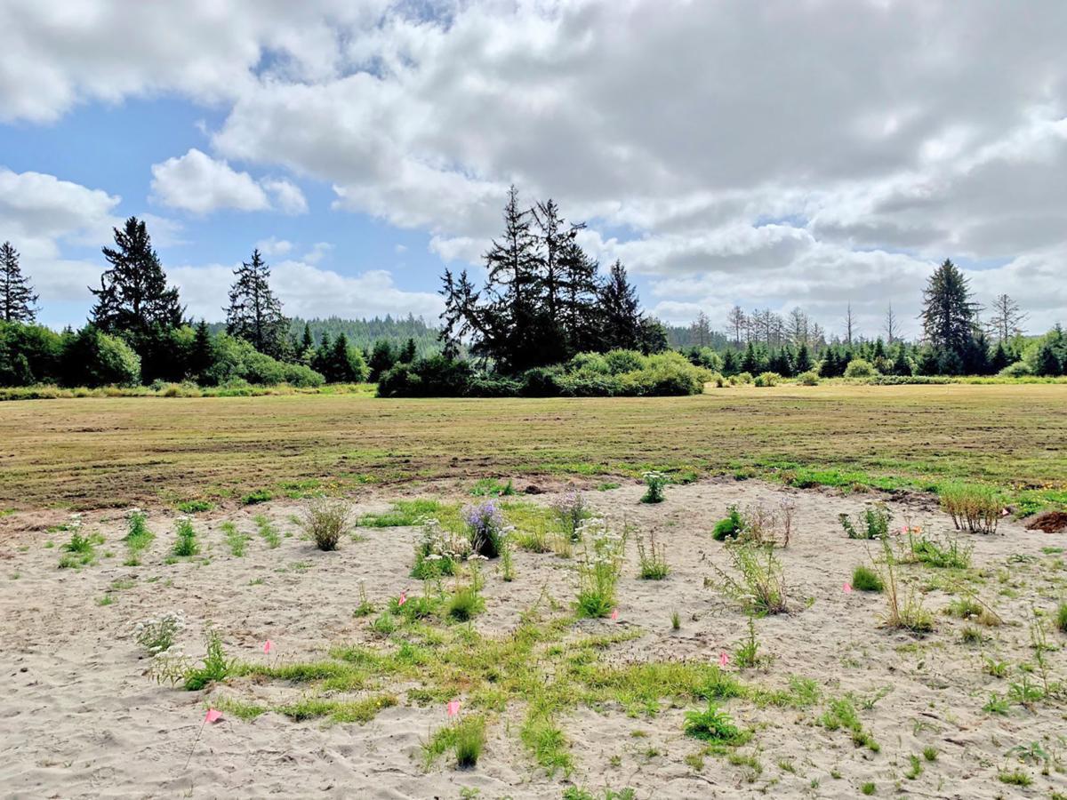 Restored former pasture