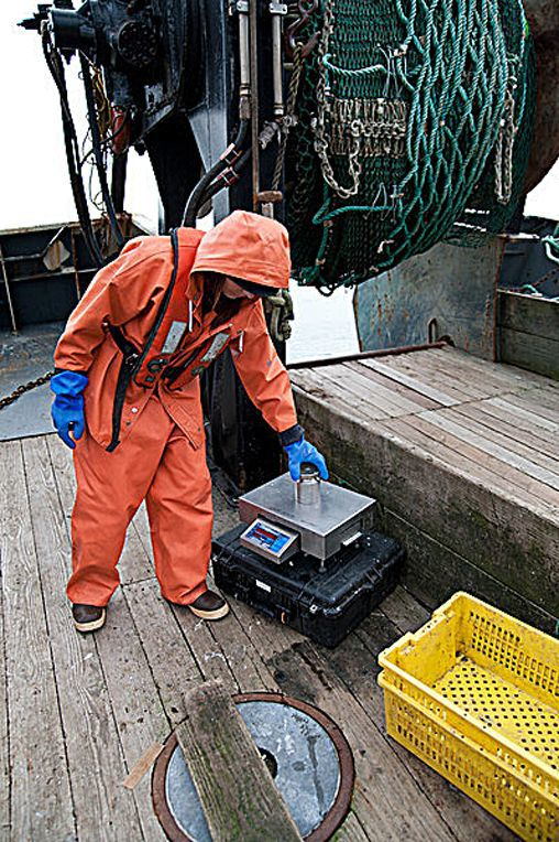 Observer program gets 'sea legs' as fisheries recover Most young monitors develop a sound working relationship with skippers and crews