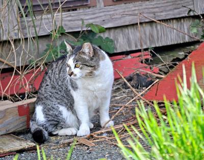Ark cats 4