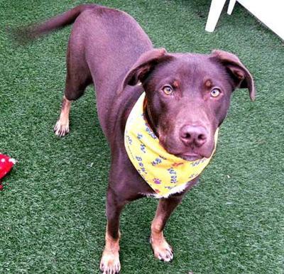 Humane Society Pet Report: 2.16.11