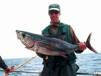Tuna fishing's hot in the cold blue water of the deep Pacific