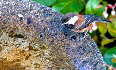 Birdwatching Bathing beauties: 'The Rest of the Best!'