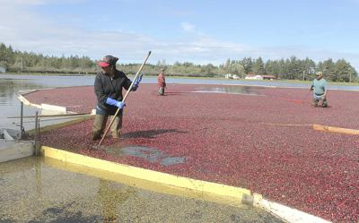Strong cranberry crop coincides with Wisconsin's down year