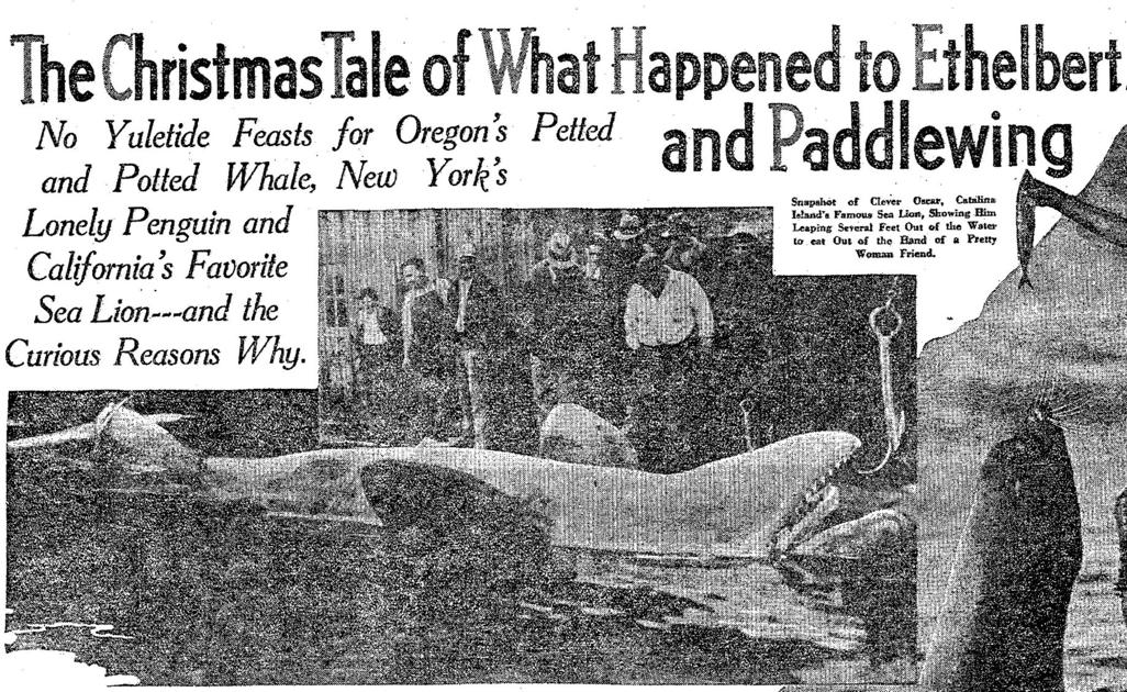 The sad, strange story of Ethelbert Orca comes to a tragic
