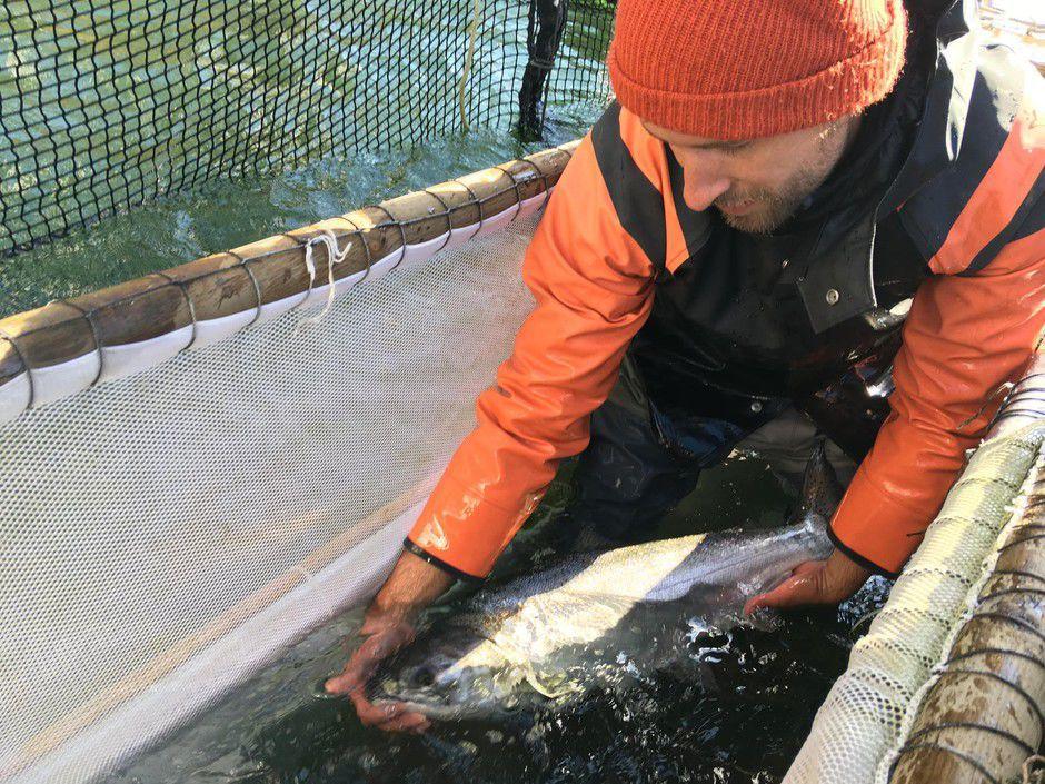 salmon traps