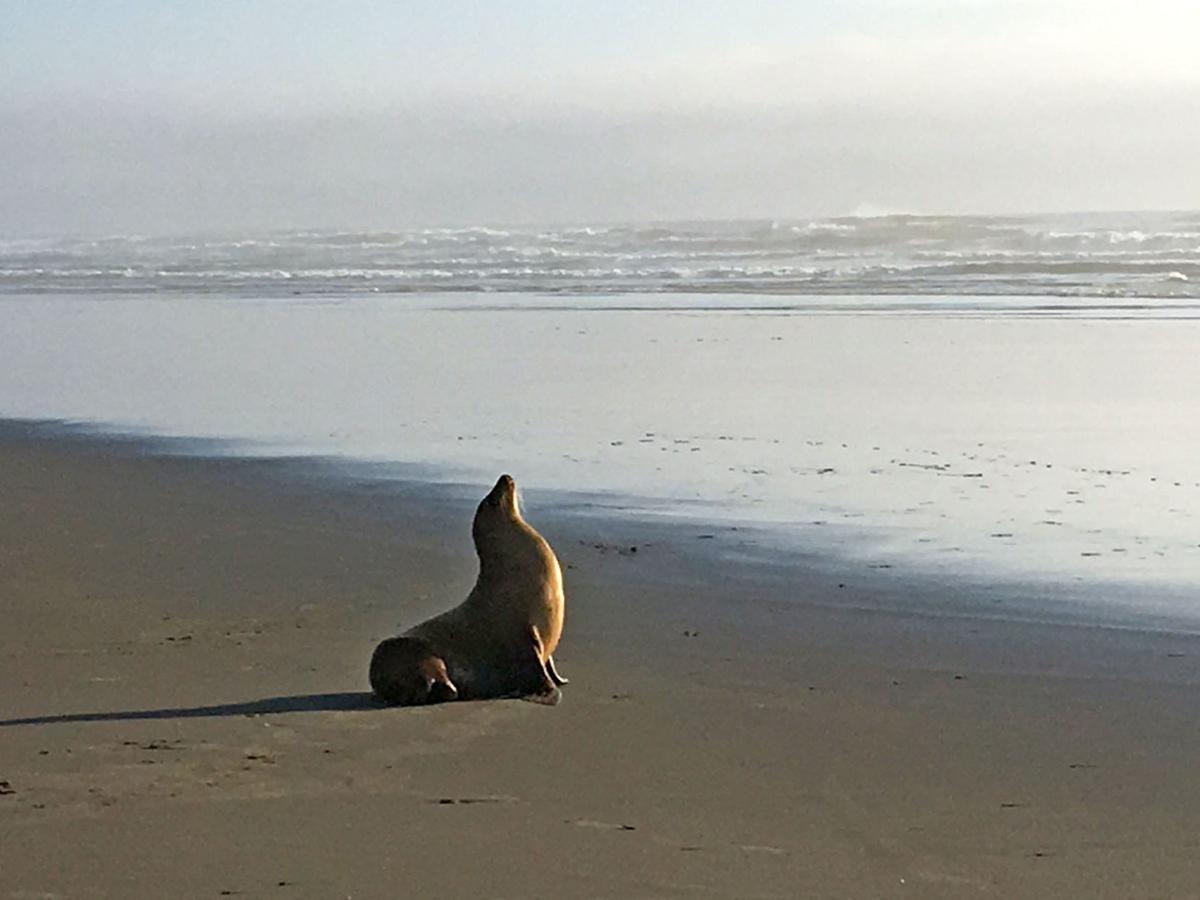 190904_co_news_sea lion1.JPG