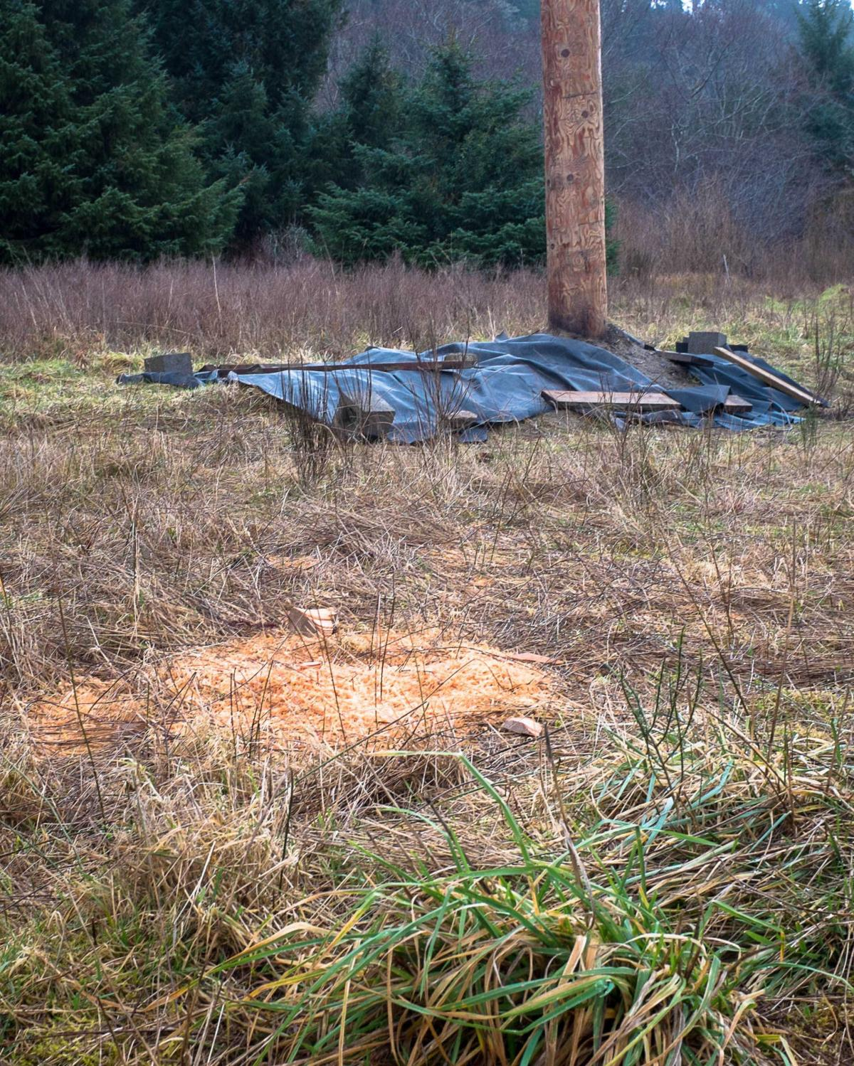 PUD digs at Chinook burial site