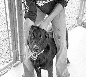 Pet Report: Big Dogs - Big Changes