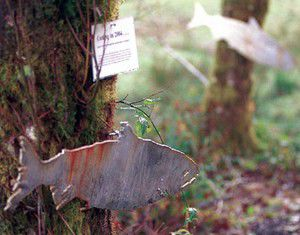 New trail offers tour of salmon spawning grounds