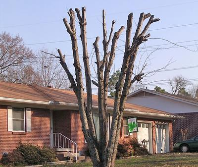 Topped tree