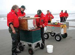 WDFW OKs razor-clam dig with make-up days late this week