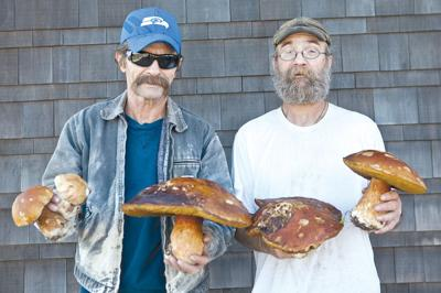 Ideal growing conditions spawn giant mushrooms on Peninsula