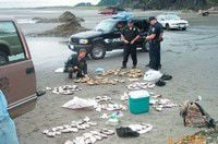 Female crab and too many surf perch land Portland men in hot water with authorities