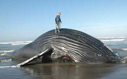 Whale, ho! Visit in March to see leviathans