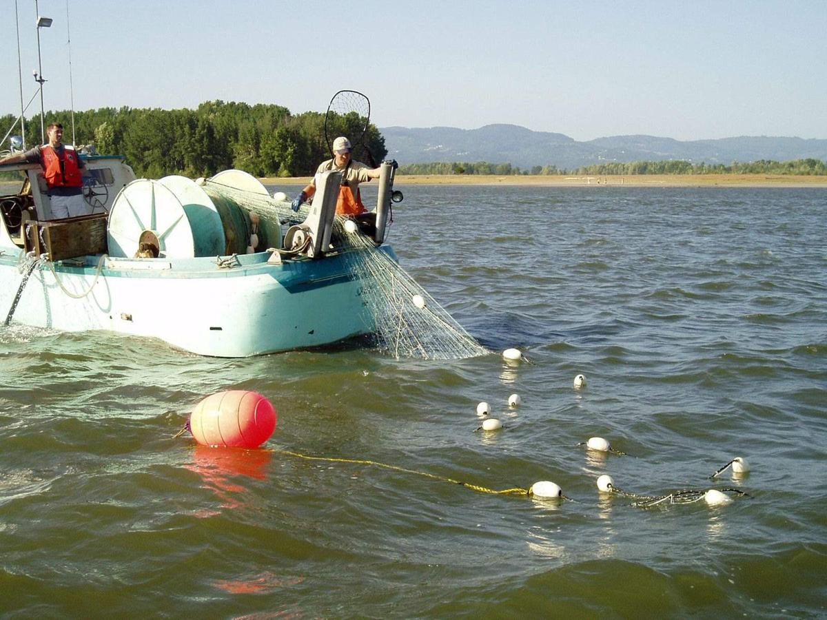 Oregon extends gillnets on Columbia