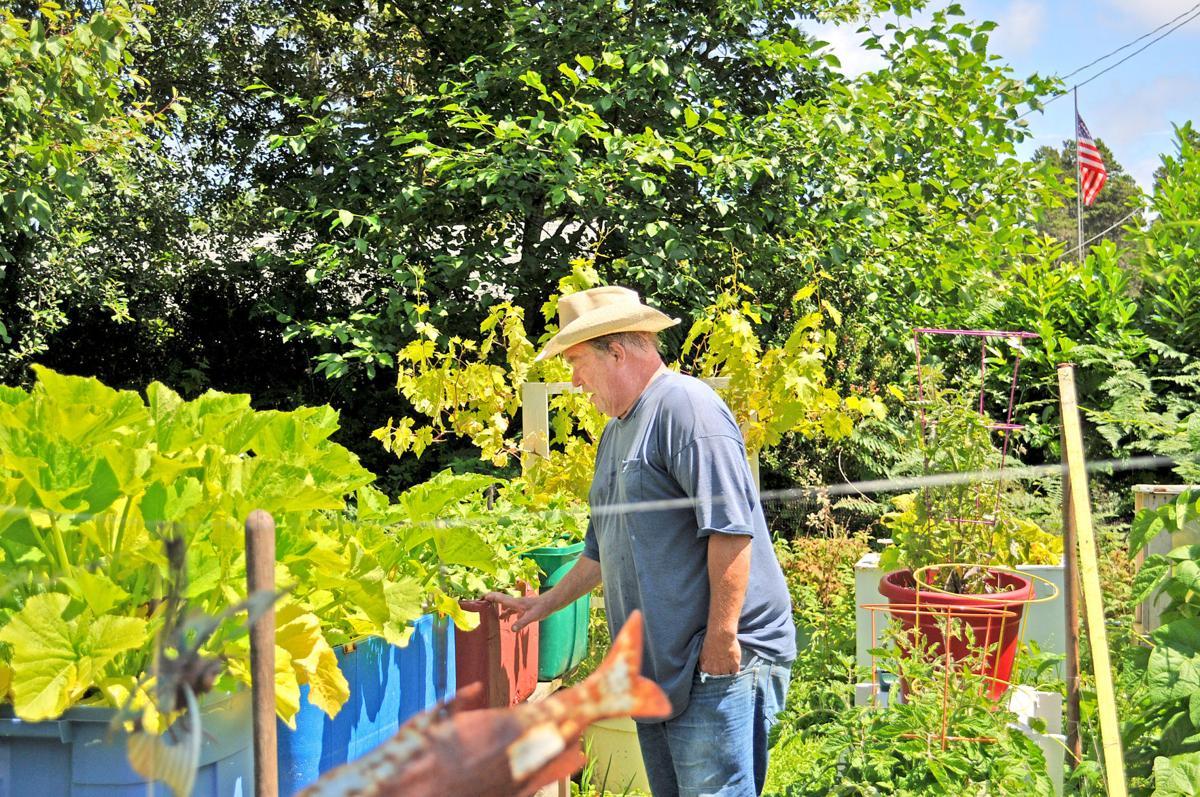 Gordon Jensen checks zucchini