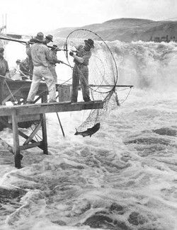 Chapter Seven: The Salmon Fishermen of the CRPA