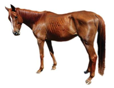 Local creating a safe haven for horses