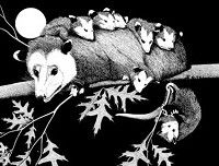 Living with Northwest Wildlife: Opossums: Part 2