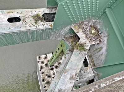Birds under the bridge