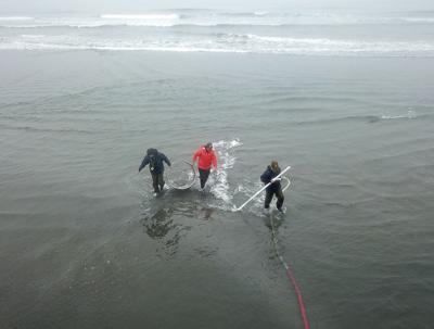 Razor clam digs delayed on Clatsop beaches
