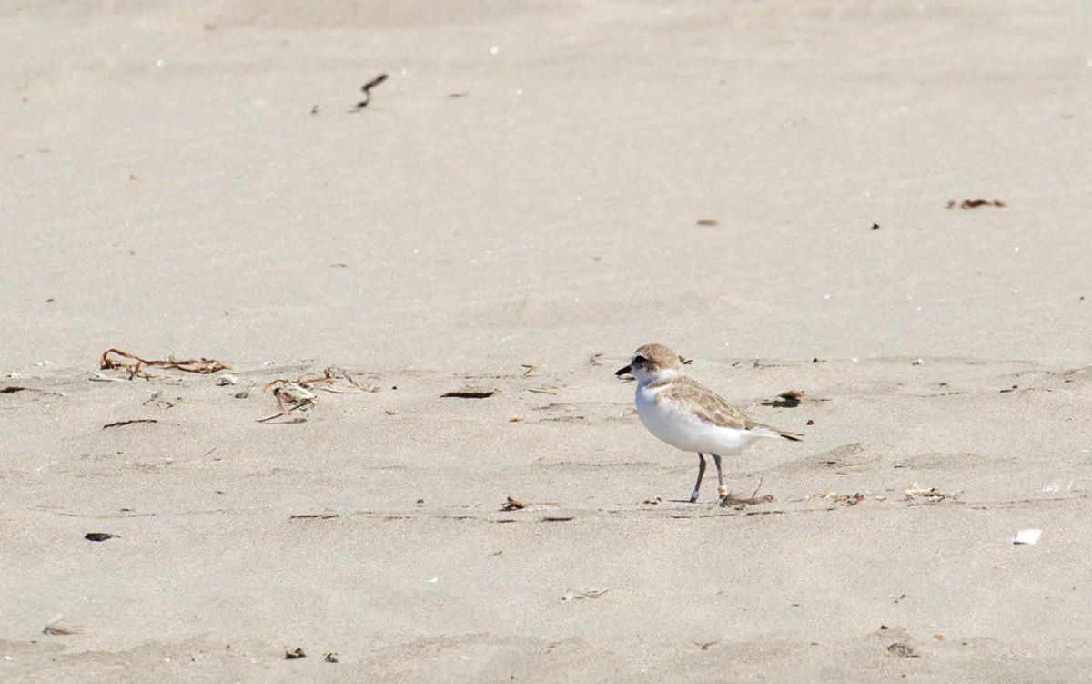 Leadbetter Point: Birdwatching opportunities par excellence!