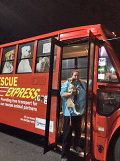 Animal Shelter Report  Rescue Express delivers deserving pets