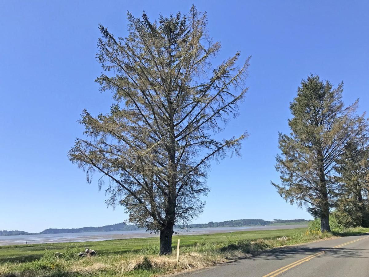 Stressed trees