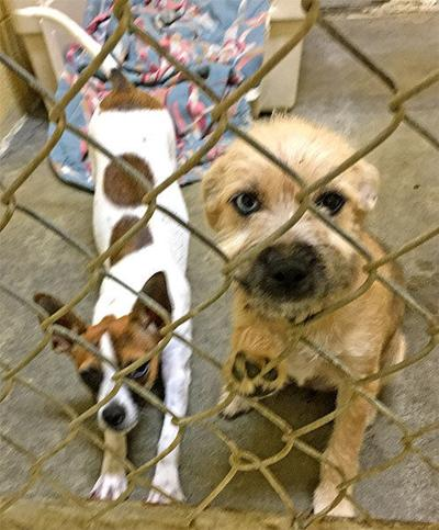 Animal Shelter Report Looking to re-home 10 new dogs
