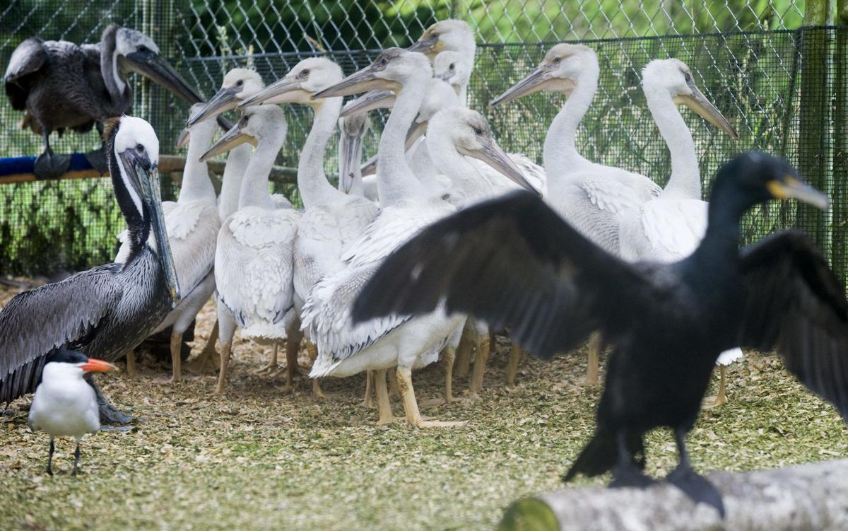 Wildlife center remembers its founder, celebrates fledgling year