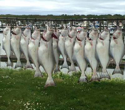 Halibut at charter office