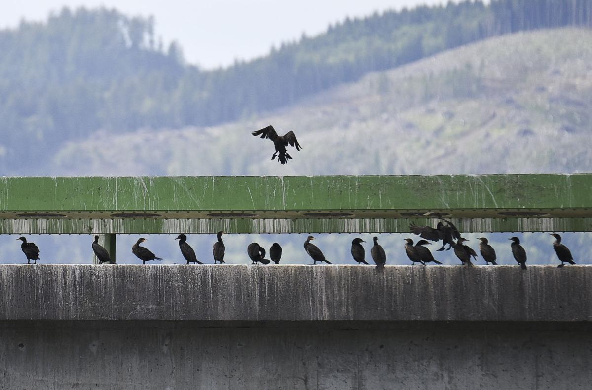 Hazed birds flock to bridge
