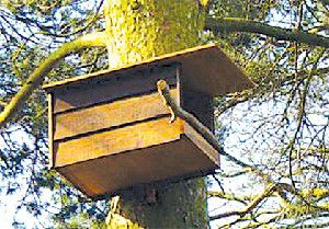 Nature Notes: Fine-feathered housing crunch, part 2