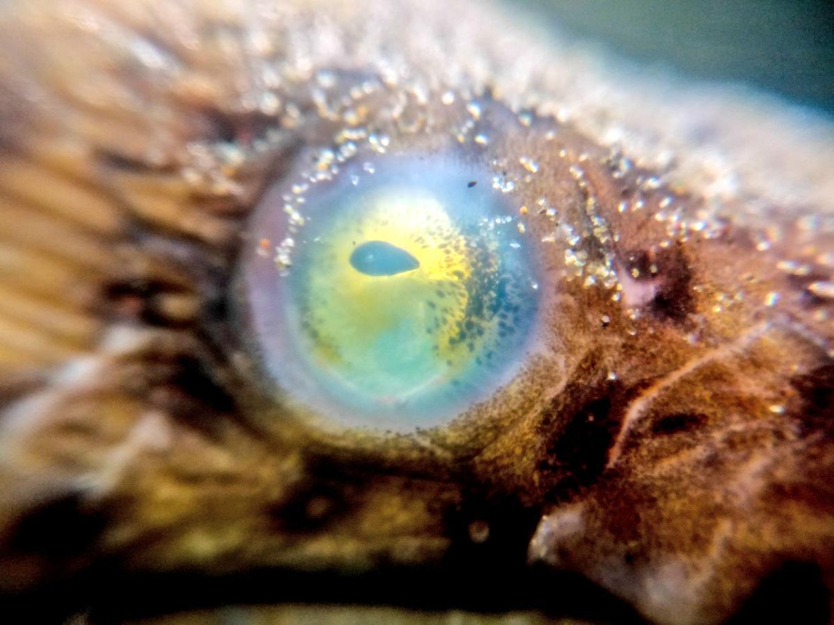 Eel eye