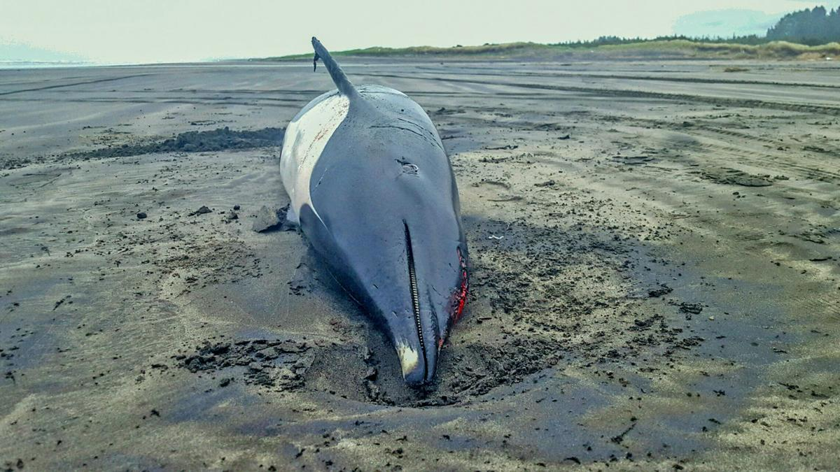 Unusual dolphin dies after being beached in Seaview