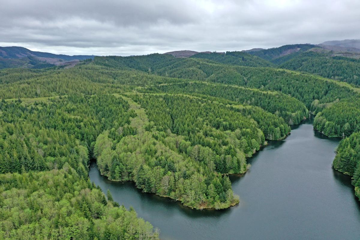 Potential Ilwaco forest acquisition