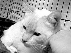 South Pacific County Humane Society Pet Report: Two special animals that need special homes!