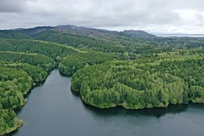 Potential land and timber acquisition