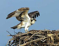 Friends of Willapa Refuge announce 2011 photo contest