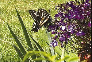 Nature Notes: Against all odds