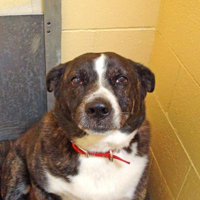 Animal Shelter Report  Good golly Miss Molli, you sure need a home!