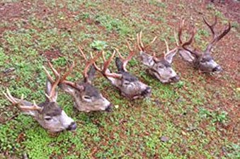 Hurting, killing animals focus of alleged poaching ring